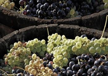 Imagen ULTRASTER18: Influencia de los ultrasonidos en las reacciones de esterificación durante la elaboración de vinos