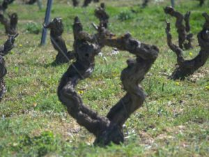 1.1-LEIRE-ZABALA-Laguardia-Rioja-Alavesa-copia-2